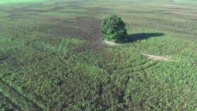 Samotny drzewo w polach zbiory
