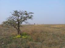 Samotny drzewo w prerii Zdjęcia Royalty Free