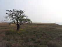 Samotny drzewo w prerii Obrazy Royalty Free