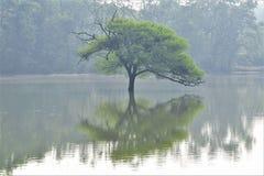 Samotny drzewo w środku jezioro Fotografia Royalty Free