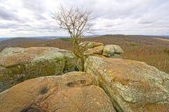 Samotny drzewo w skałach Zdjęcia Stock