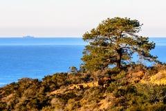Samotny drzewo w Torrey sosen stanu rezerwie Obraz Royalty Free
