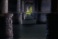Samotny drzewo w wodzie między kamieniem Obrazy Stock