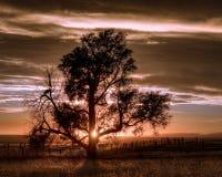 Samotny drzewo w wsi Fotografia Royalty Free