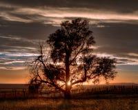 Samotny drzewo w wsi Zdjęcie Royalty Free