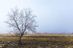 Samotny drzewo w zima krajobrazie Fotografia Royalty Free