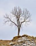 Samotny Drzewo w Zima na górze wzgórza Fotografia Royalty Free