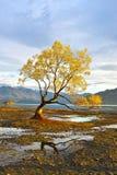 Samotny drzewo świt Obraz Stock