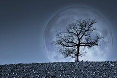 Samotny drzewo z księżyc na tle - wizerunek z elementem meblującym obrazy stock