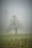 Samotny drzewo z mgłą Zdjęcia Royalty Free