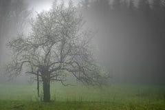 Samotny drzewo z mgłą Fotografia Stock