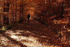 Samotny dziewczyny odprowadzenie w tajemniczym jesień lesie Zdjęcie Stock