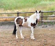 Samotny farba koń zdjęcie royalty free
