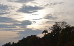 samotny ilustracyjny sunset drzewa wektora obrazy royalty free