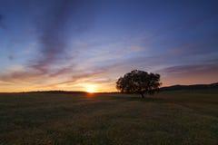 samotny ilustracyjny sunset drzewa wektora Zdjęcia Royalty Free