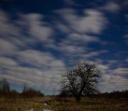 samotny ilustracyjny sunset drzewa wektora Obrazy Stock