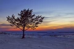 samotny ilustracyjny sunset drzewa wektora Fotografia Royalty Free