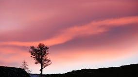 samotny ilustracyjny sunset drzewa wektora Zdjęcie Royalty Free