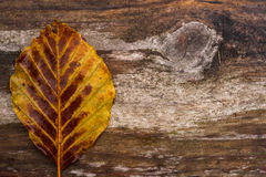 Samotny jesień liść na drewnie Fotografia Stock