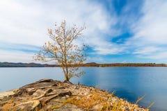 Samotny jesieni drzewo na skalistym brzeg piękny jezioro Zdjęcia Stock