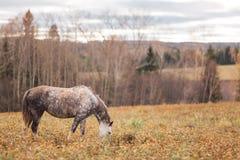 Samotny koń Zdjęcia Royalty Free