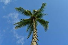 Samotny Kokosowy drzewo z niebieskim niebem Zdjęcia Royalty Free