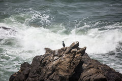 Samotny kormoran Fotografia Royalty Free