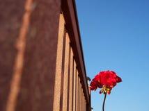 Samotny kwiat Obrazy Stock