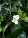 Samotny kwiat Zdjęcia Royalty Free