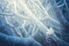Samotny kwiat w zimnym zmroku Obrazy Royalty Free