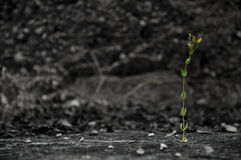 samotny kwiatek Obrazy Royalty Free