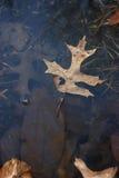 Samotny liść Obraz Stock