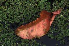 Samotny liść Zdjęcie Royalty Free