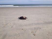 Samotny młody seagull Zdjęcie Royalty Free