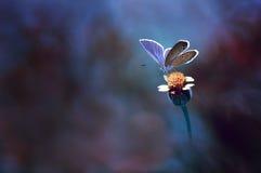 Samotny mały motyl Zdjęcie Royalty Free