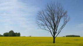 Samotny nagi drzewo w ? zbiory