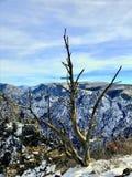 Samotny nieżywy drzewo Obraz Stock