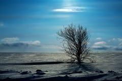 samotny śnieg drzewo Obraz Royalty Free