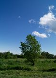 samotny piękny pole zieleni krajobrazu lata zmierzchu drzewo Obraz Stock
