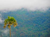 samotny piękny pole zieleni krajobrazu lata zmierzchu drzewo Fotografia Stock