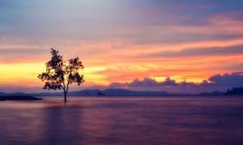 samotny piękny pole zieleni krajobrazu lata zmierzchu drzewo Zdjęcie Royalty Free