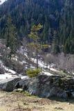 samotny piękny pole zieleni krajobrazu lata zmierzchu drzewo Obrazy Royalty Free