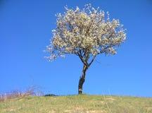 samotny piękny pole zieleni krajobrazu lata zmierzchu drzewo Obrazy Stock