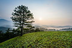 samotny piękny pole zieleni krajobrazu lata zmierzchu drzewo Fotografia Royalty Free