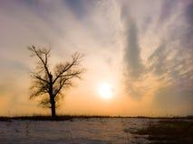 samotny piękny pole zieleni krajobrazu lata zmierzchu drzewo Zdjęcia Royalty Free