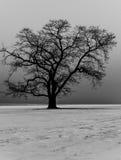 samotny piękny pole zieleni krajobrazu lata zmierzchu drzewo Zdjęcie Stock