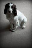 samotny pies Zdjęcia Royalty Free