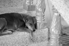 samotny pies Obraz Royalty Free