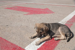 samotny pies Fotografia Stock