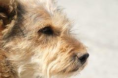 samotny pies Obrazy Stock